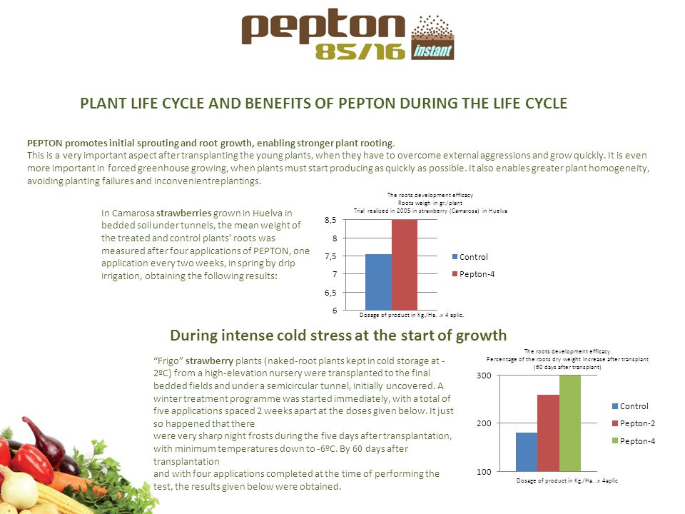 PLANT LIFE CYCLE AND BENEFITS OF PEPTON DURING THE LIFE CYCLE