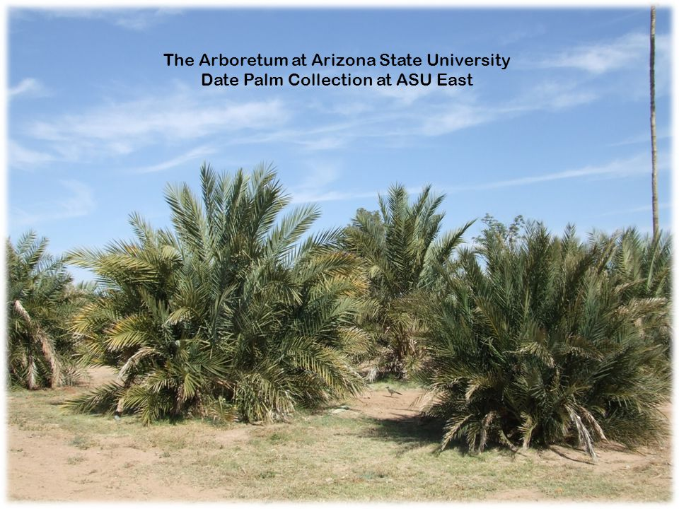 The Arboretum at Arizona State University