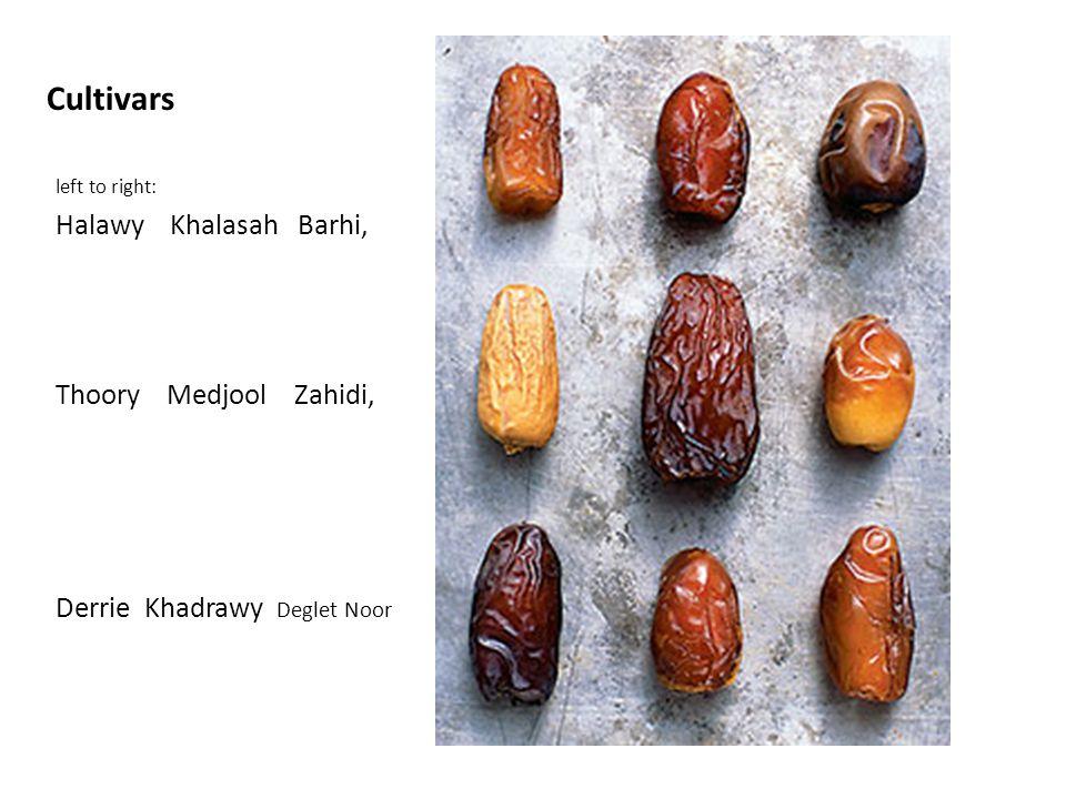 Cultivars Halawy Khalasah Barhi, Thoory Medjool Zahidi,
