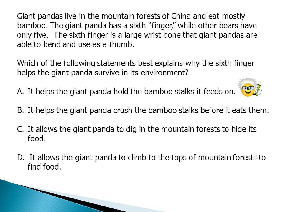 Giant pandas live in the mountain forests of China and eat mostly bamboo. The giant panda has a sixth finger, while other bears have only five. The sixth finger is a large wrist bone that giant pandas are able to bend and use as a thumb.