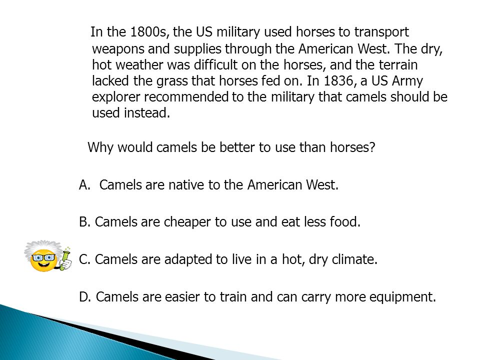In the 1800s, the US military used horses to transport weapons and supplies through the American West. The dry, hot weather was difficult on the horses, and the terrain lacked the grass that horses fed on. In 1836, a US Army explorer recommended to the military that camels should be used instead.