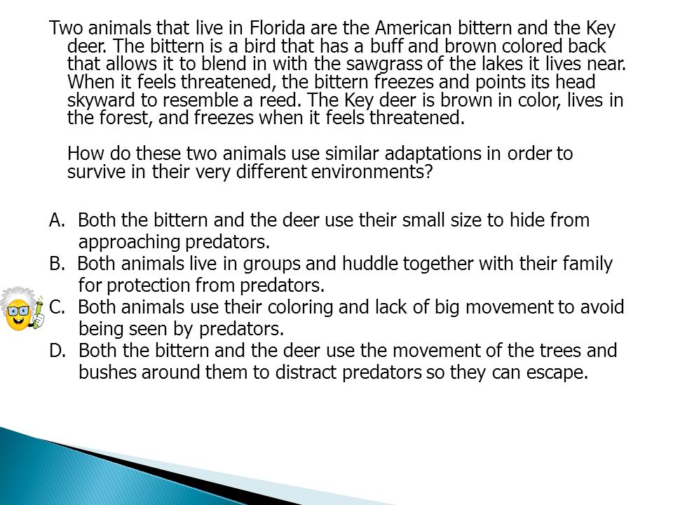 Two animals that live in Florida are the American bittern and the Key deer.