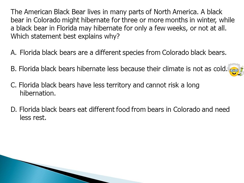 The American Black Bear lives in many parts of North America