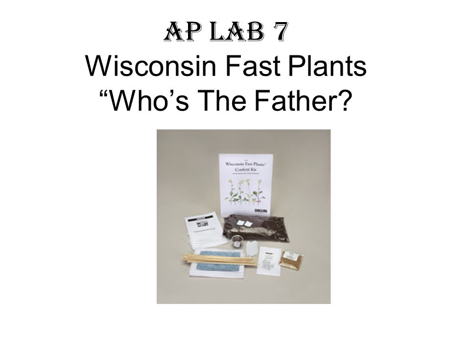AP Lab 7 Wisconsin Fast Plants Who's The Father