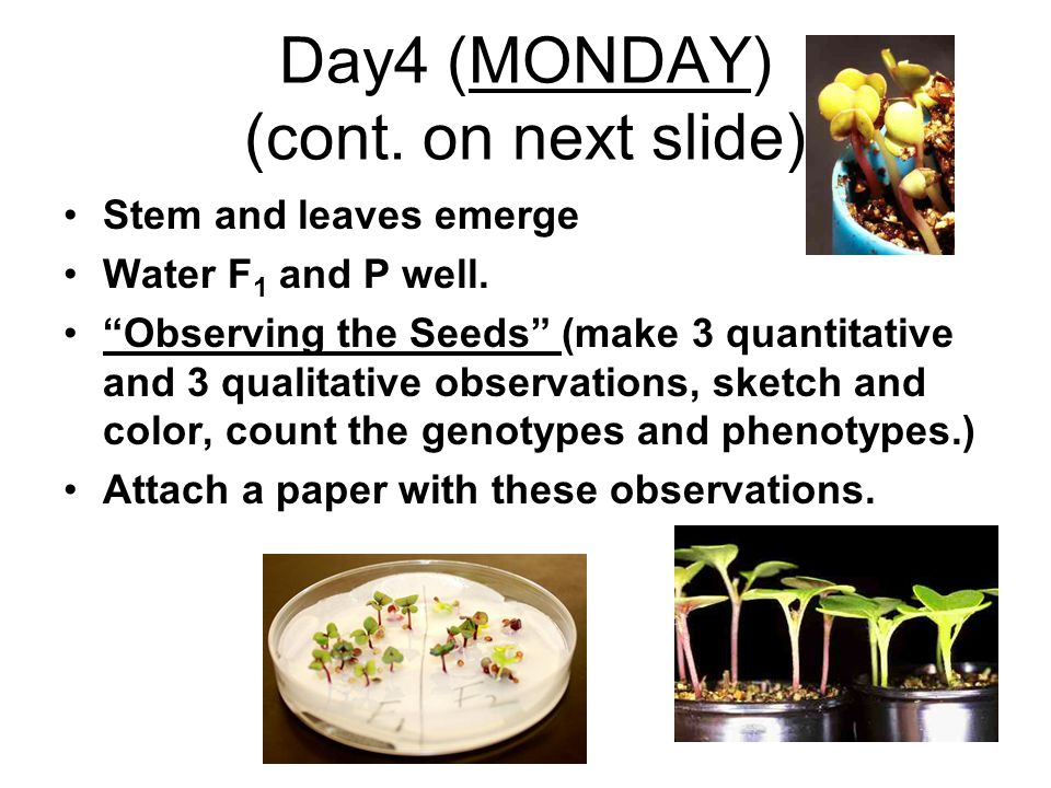 Day4 (MONDAY) (cont. on next slide)