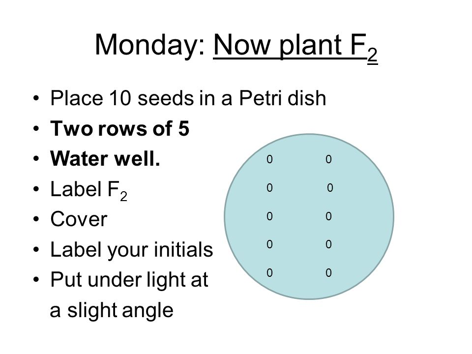Monday: Now plant F2 Place 10 seeds in a Petri dish Two rows of 5
