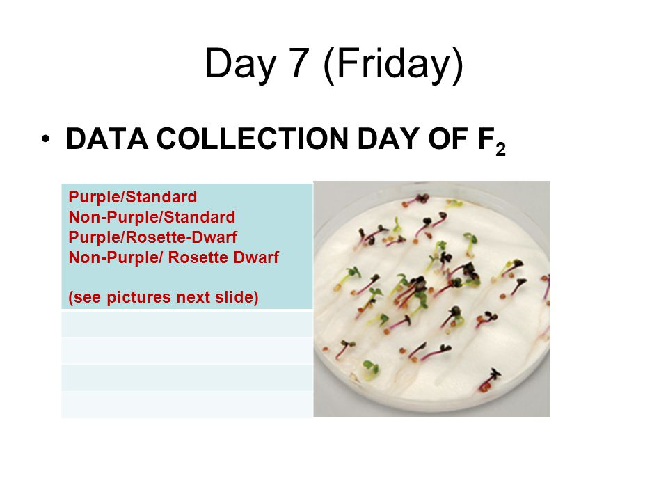 Day 7 (Friday) DATA COLLECTION DAY OF F2 Purple/Standard