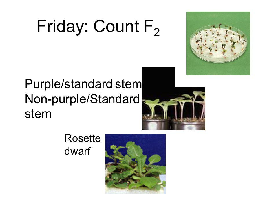 Friday: Count F2 Purple/standard stem Non-purple/Standard stem