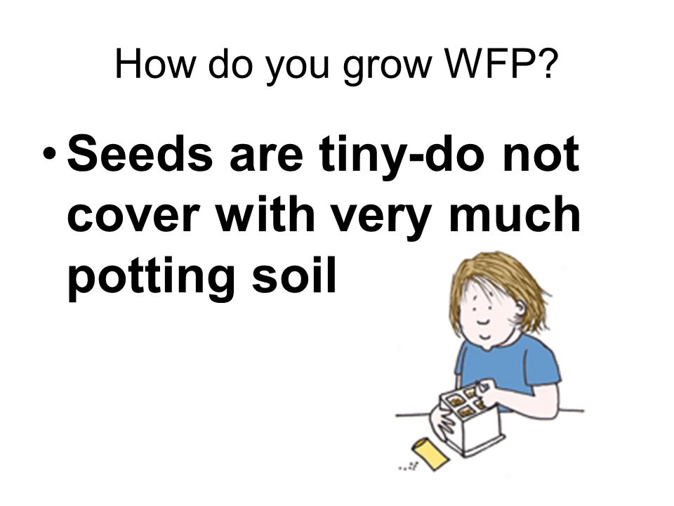 Seeds are tiny-do not cover with very much potting soil