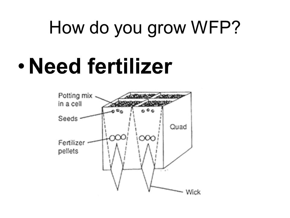 How do you grow WFP Need fertilizer