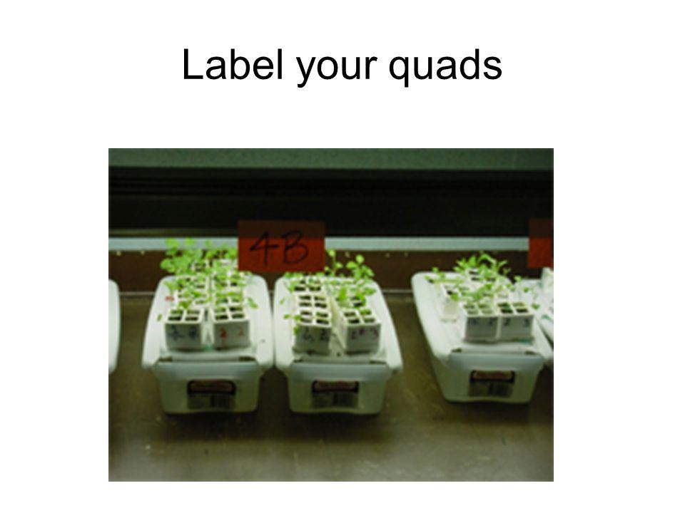 Label your quads