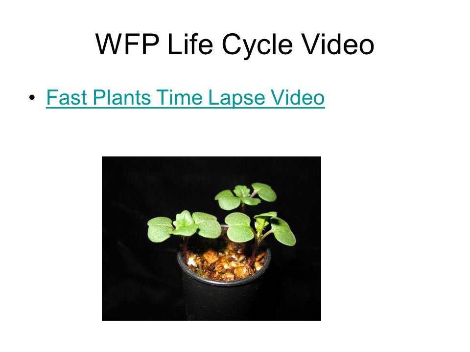 WFP Life Cycle Video Fast Plants Time Lapse Video