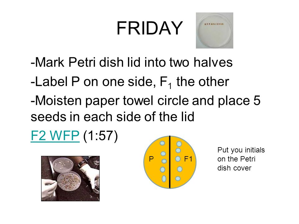FRIDAY -Mark Petri dish lid into two halves