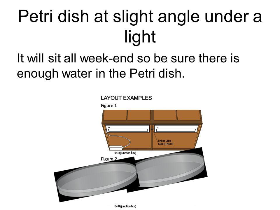 Petri dish at slight angle under a light