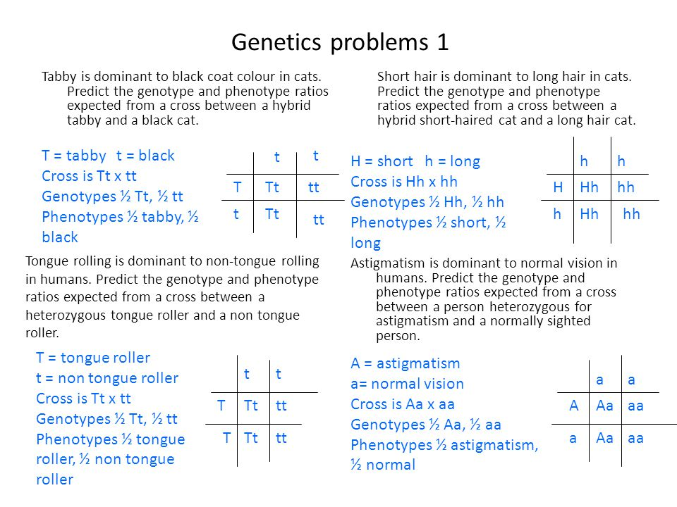 Genetics problems 1 T = tabby t = black Cross is Tt x tt