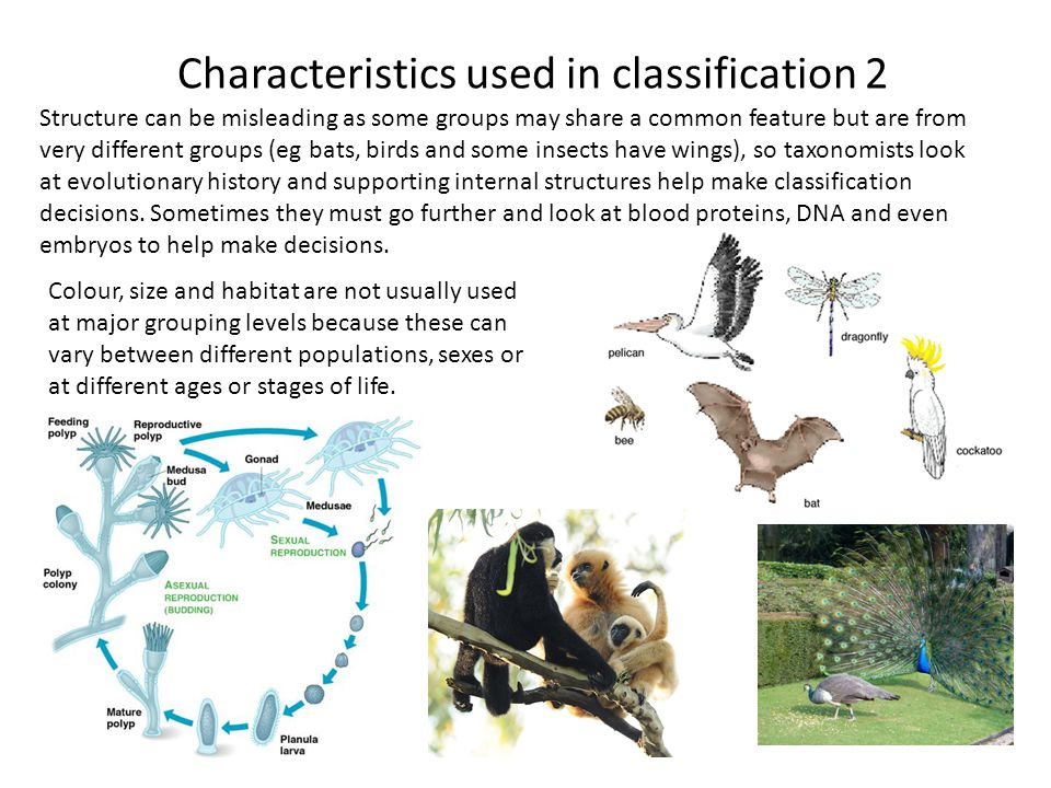 Characteristics used in classification 2