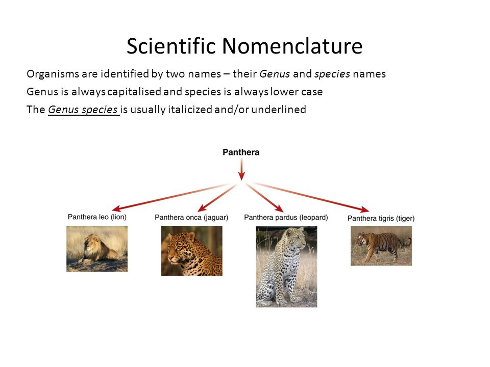 Scientific Nomenclature
