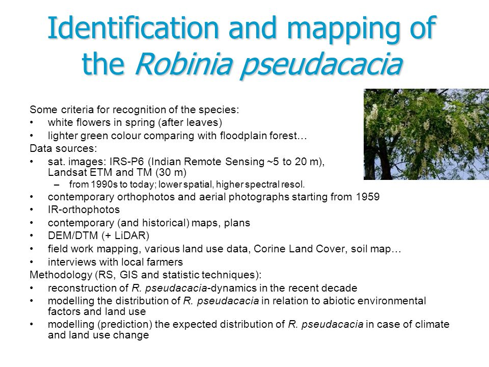 Identification and mapping of the Robinia pseudacacia