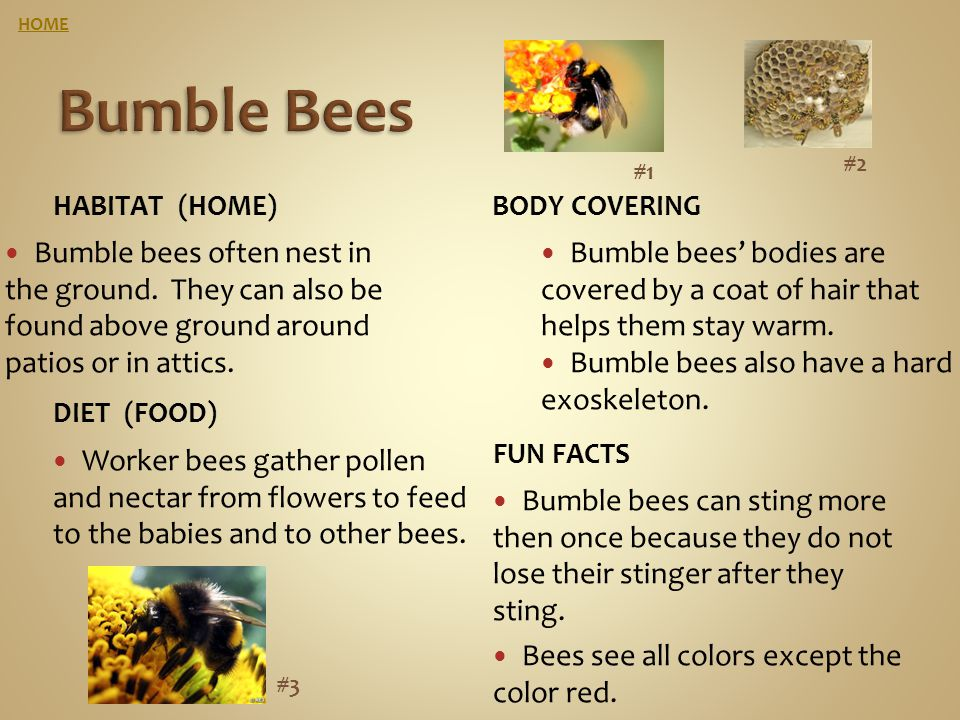 HOME Bumble Bees. #2. #1. Habitat (home) Body covering.