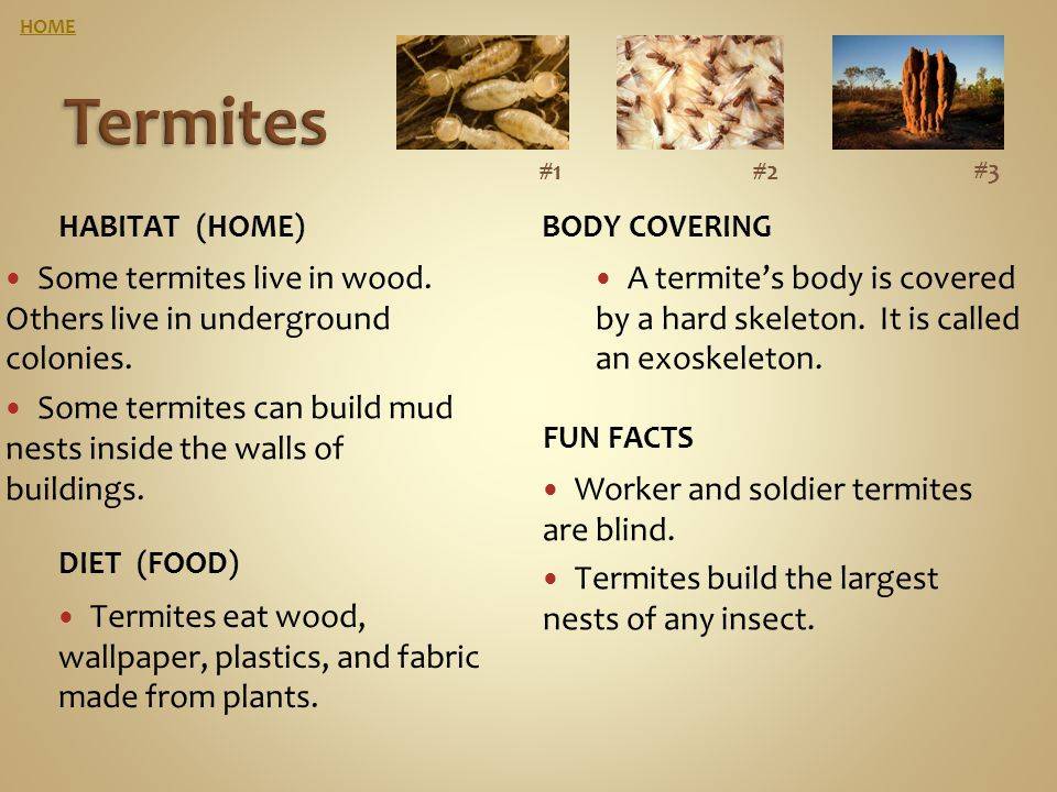 HOME Termites. #1. #2. #3. Habitat (home) Body covering. Some termites live in wood. Others live in underground colonies.