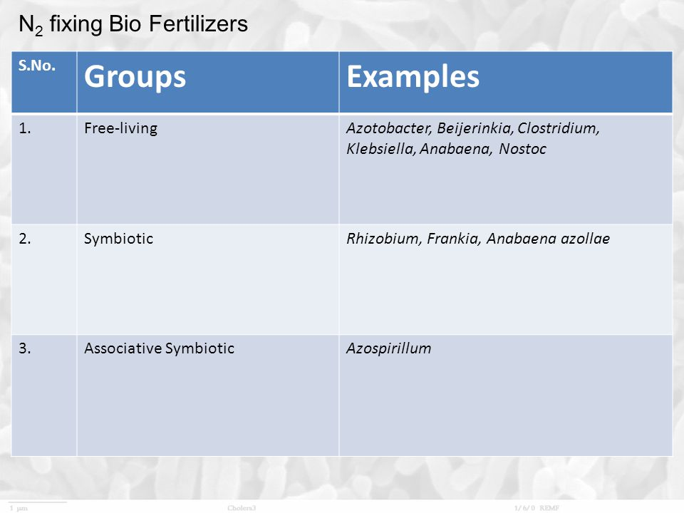 Groups Examples N2 fixing Bio Fertilizers S.No. 1. Free-living