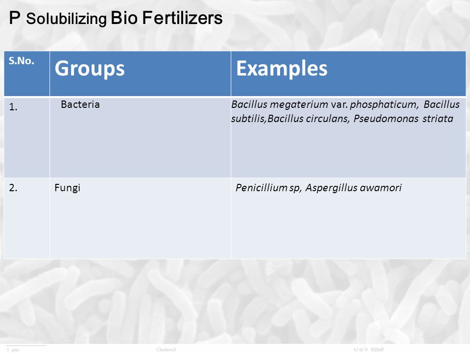 Groups Examples P Solubilizing Bio Fertilizers S.No. 1. Bacteria