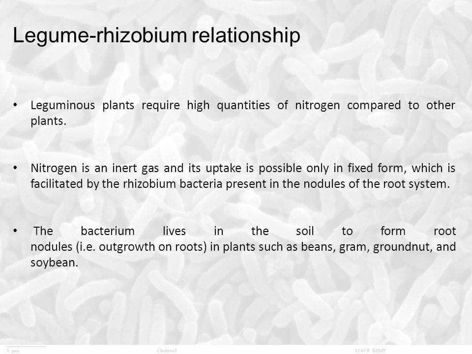 Legume-rhizobium relationship
