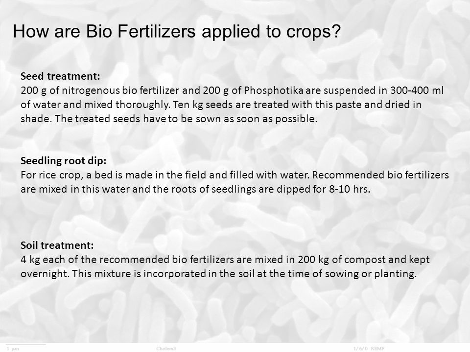 How are Bio Fertilizers applied to crops