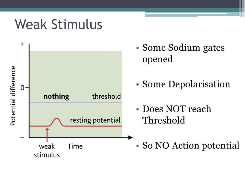 Weak Stimulus Some Sodium gates opened Some Depolarisation