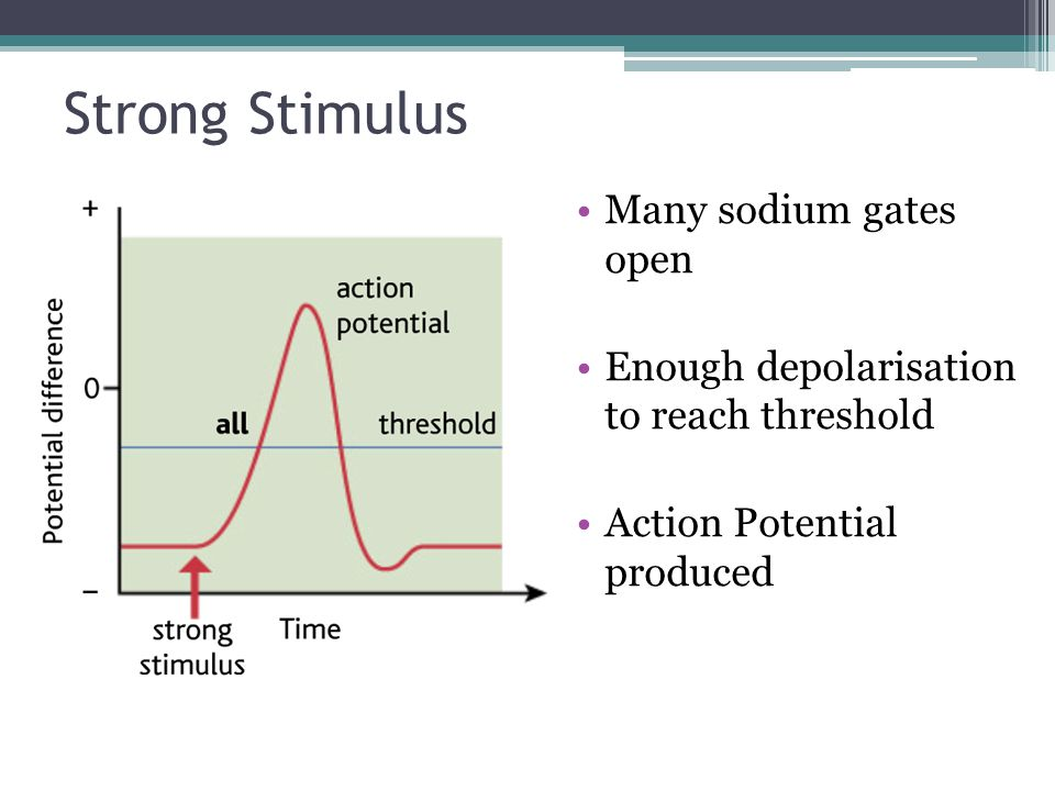 Strong Stimulus Many sodium gates open