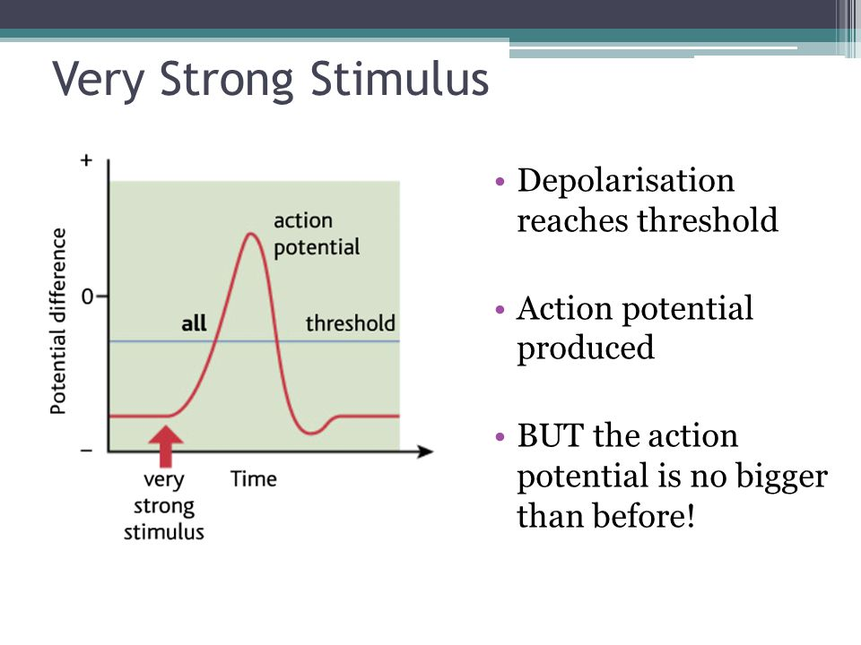 Very Strong Stimulus Depolarisation reaches threshold