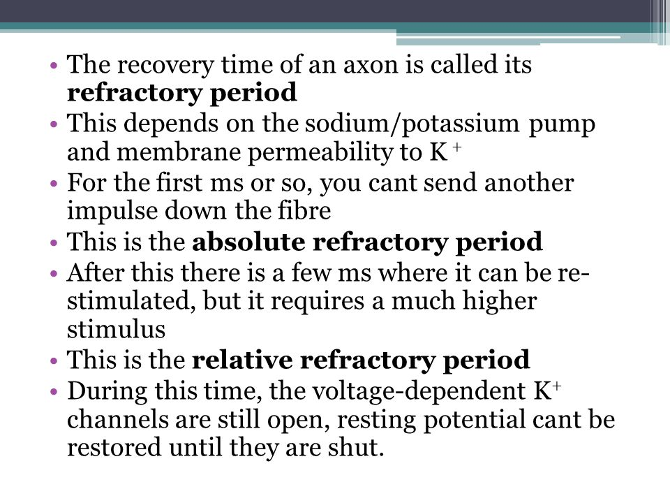 The recovery time of an axon is called its refractory period