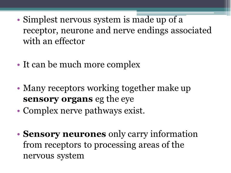 Simplest nervous system is made up of a receptor, neurone and nerve endings associated with an effector