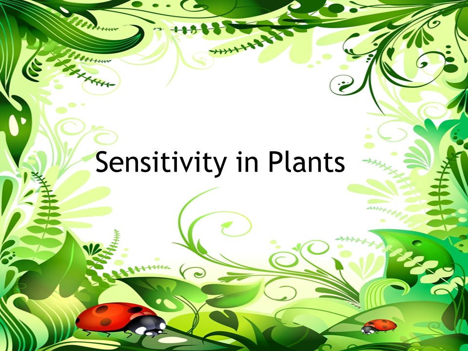 Sensitivity in Plants