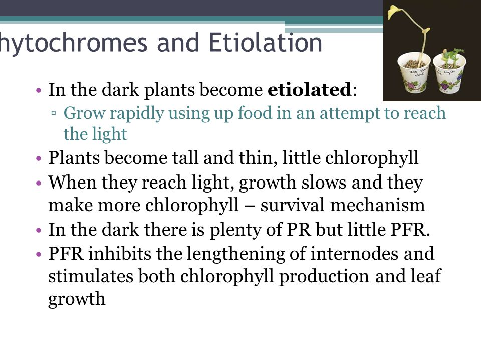 Phytochromes and Etiolation