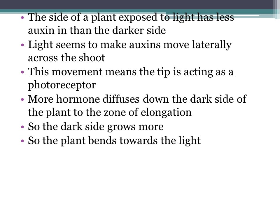 The side of a plant exposed to light has less auxin in than the darker side
