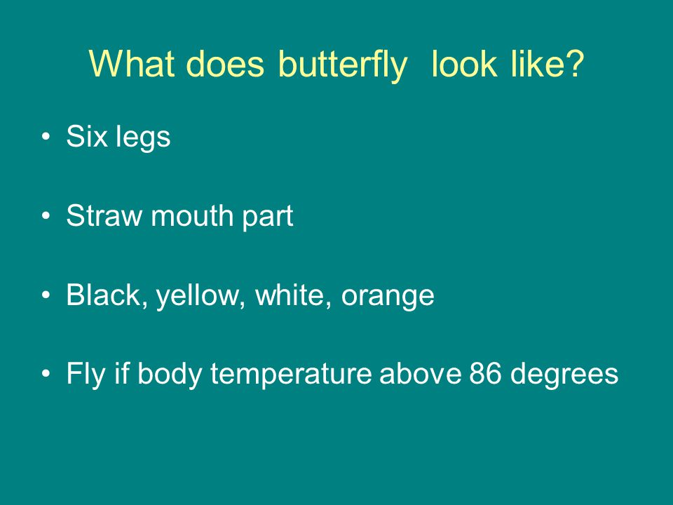 What does butterfly look like