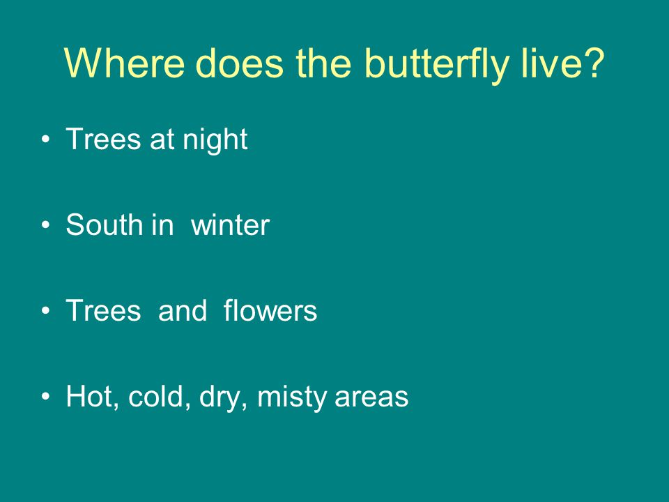 Where does the butterfly live