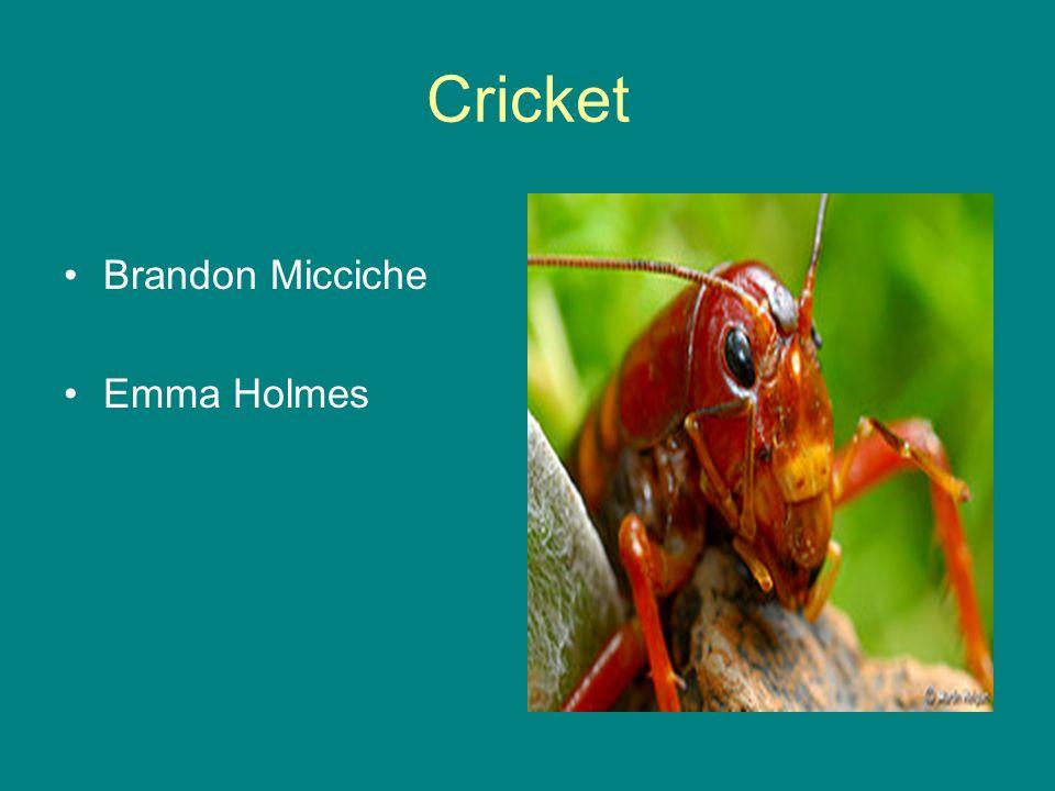 Cricket Brandon Micciche Emma Holmes