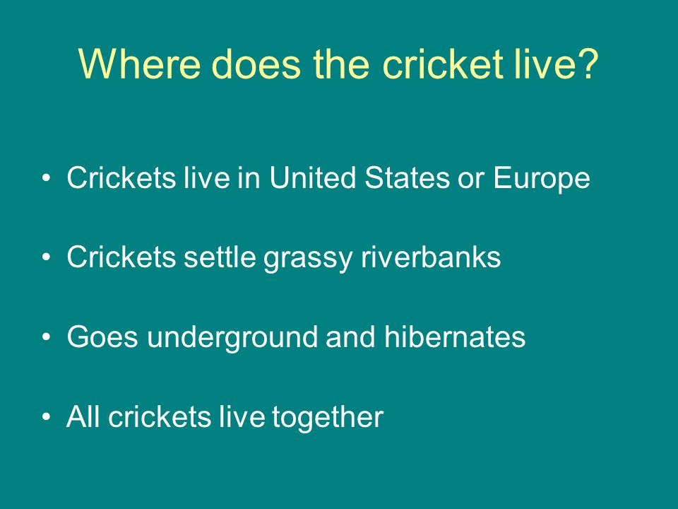 Where does the cricket live