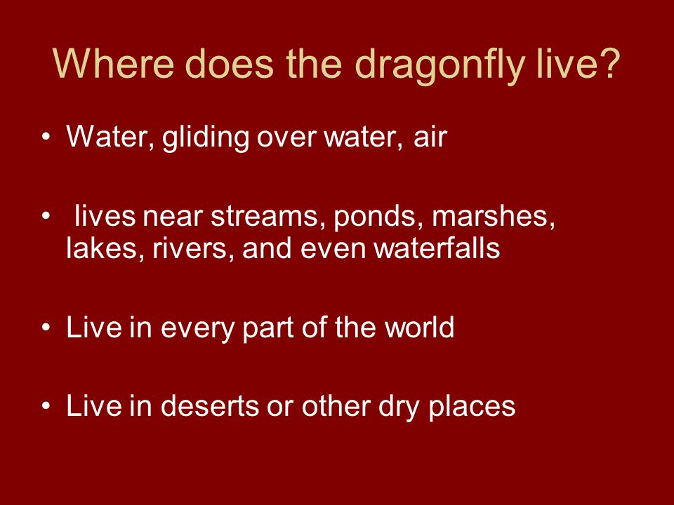 Where does the dragonfly live