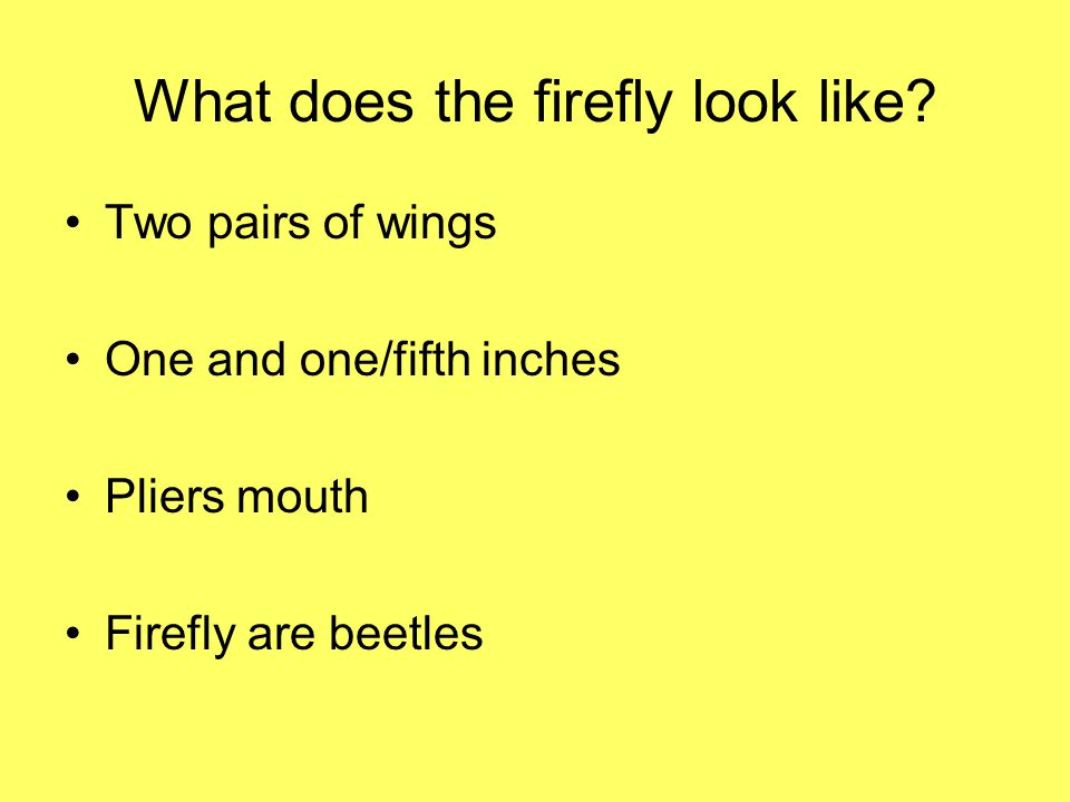 What does the firefly look like