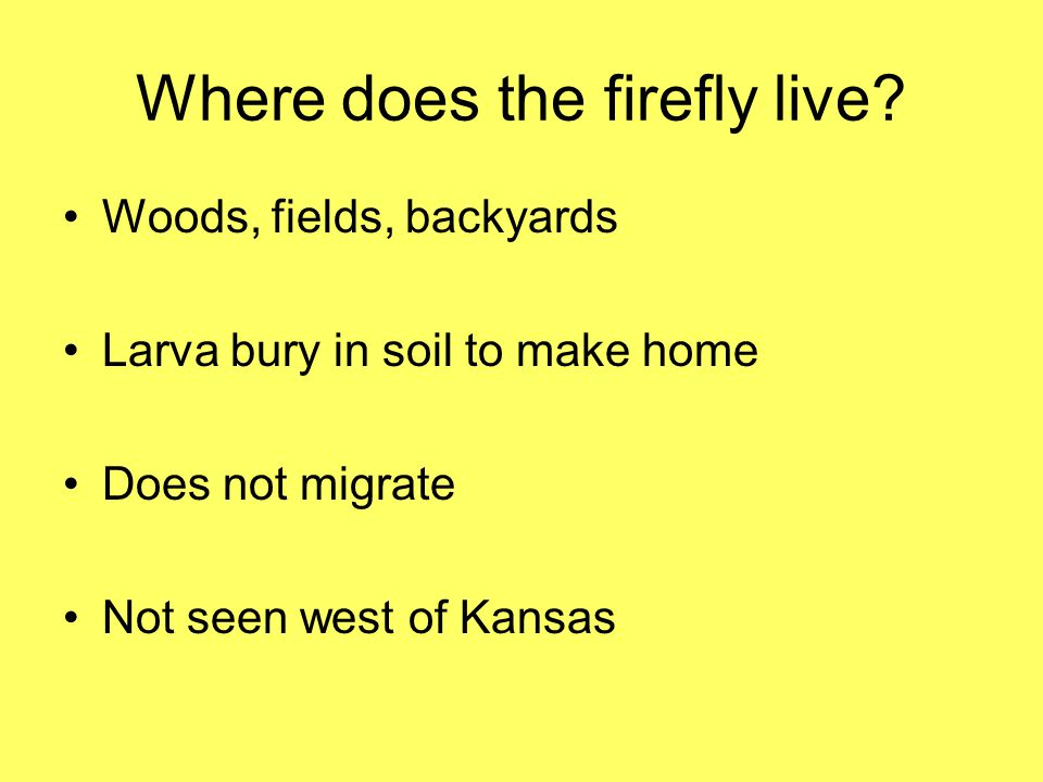 Where does the firefly live
