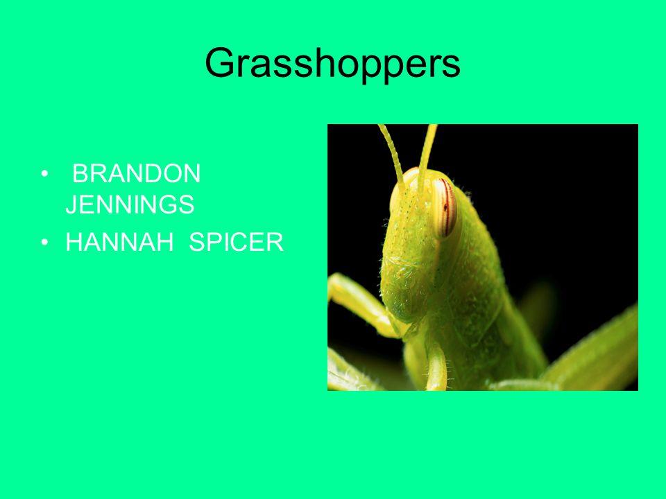 Grasshoppers BRANDON JENNINGS HANNAH SPICER