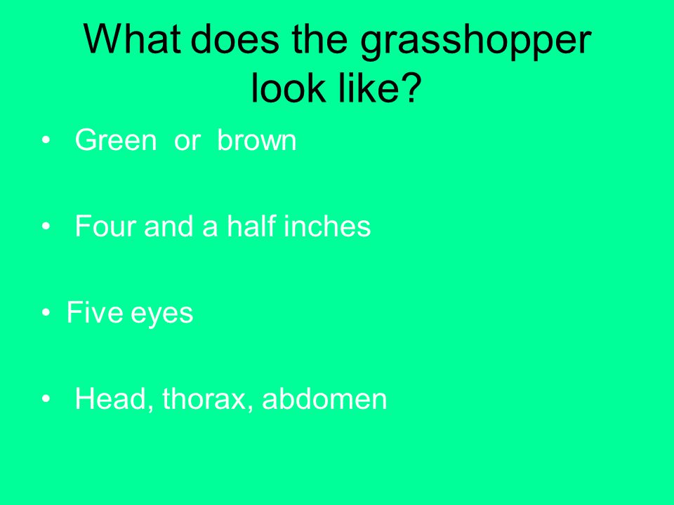 What does the grasshopper look like