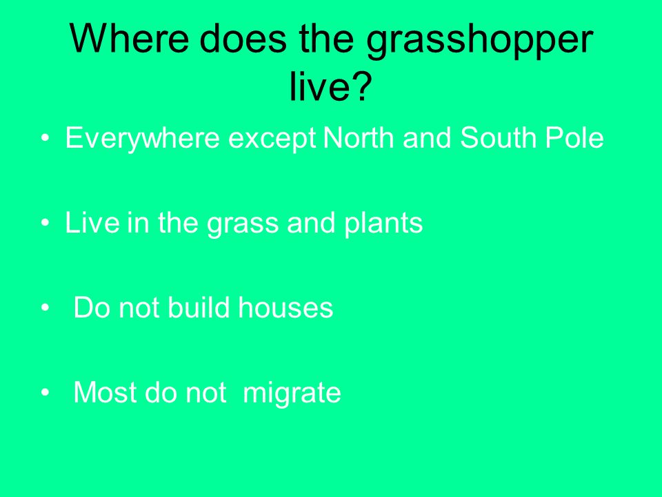 Where does the grasshopper live