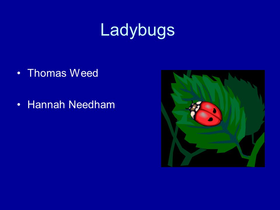 Ladybugs Thomas Weed Hannah Needham