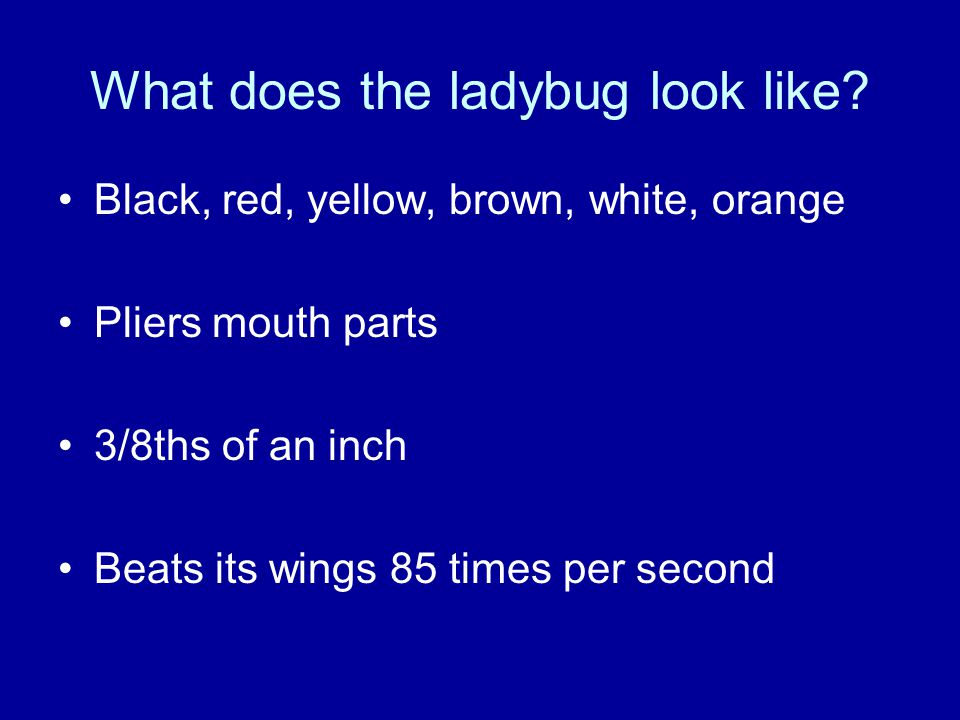 What does the ladybug look like
