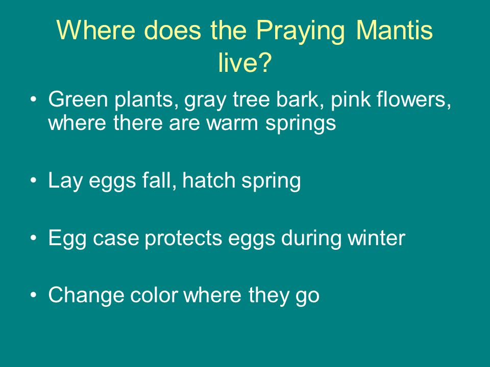Where does the Praying Mantis live