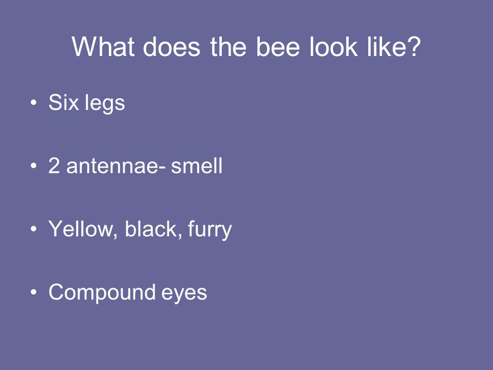 What does the bee look like